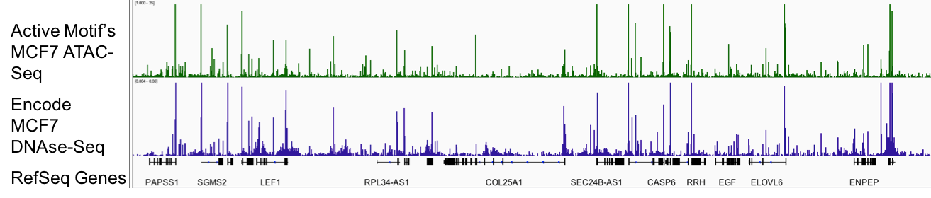ATAC-Seq Data 1