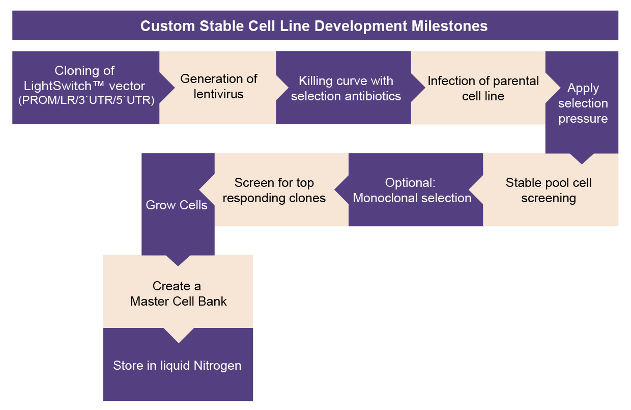 Cell Line Production Flowpath
