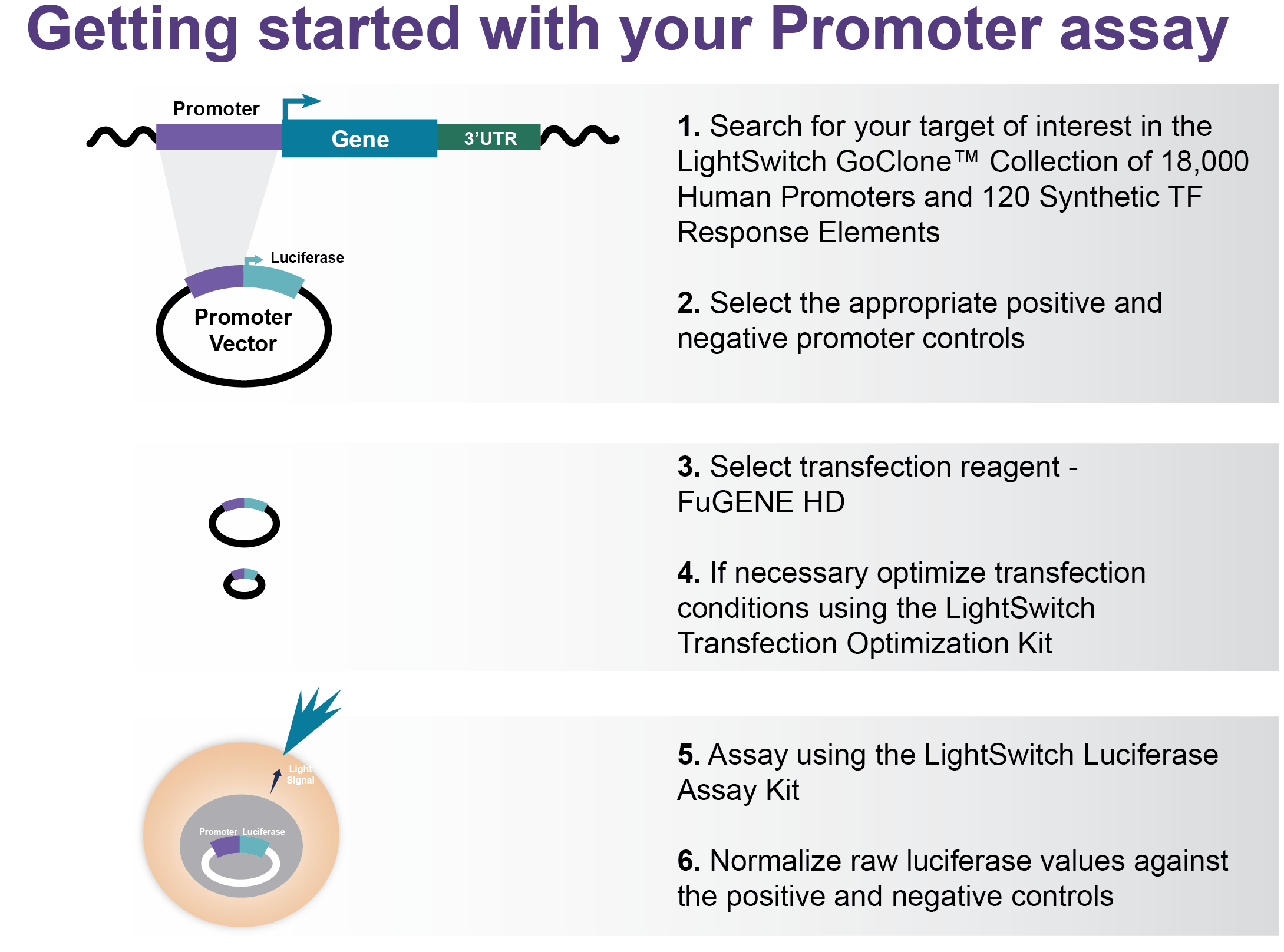Getting Started with your LightSwitch Promoter Assay