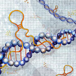 Tools to Study Gene Regulation