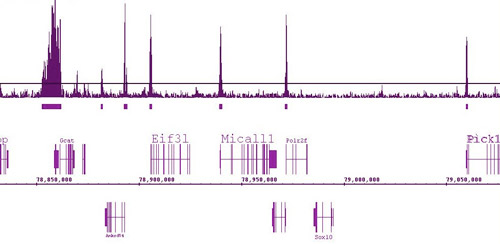 ChIP-IT ChIP-Seq data using Histone H3K9ac antibody