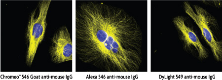 alpha Tubulin staining by Chromeo 546, Alexa 546 and DyLight 549 fluorescent secondary antibody conjugates