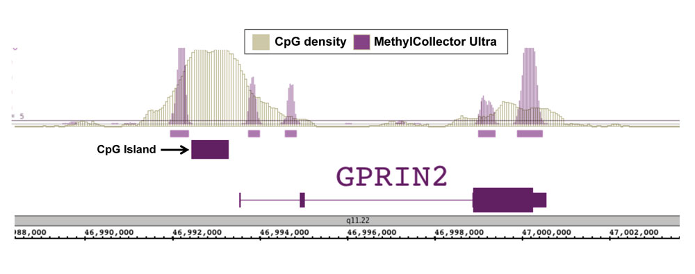 Next-Gen sequencing data generated using MethylCollector Ultra detects methylation at CpG shores