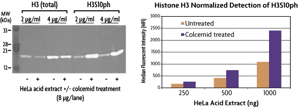 Comparison of Histone H3S10ph in WB versus Histone PTM Multiplex Kit