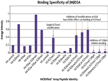 Graphical analysis of JMJD2A protein domain binding specificity