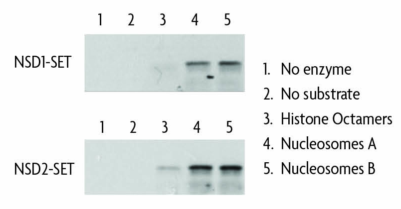 HMT activity assay comparing recombinant nucleosomes and histone octamers as substrates.