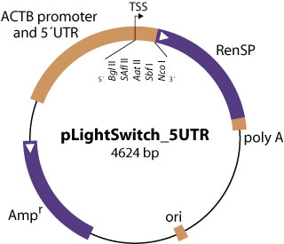 pLightSwitch_5UTR vector diagram