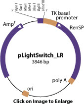 pLightSwitch_LR vector diagram