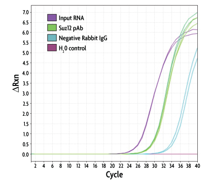 Real-time RT-PCR analysis of Suz12/normal rabbit IgG RNA-ChIP samples