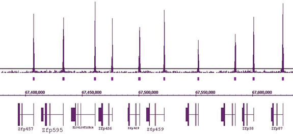 ChIP-Seq data generated by Active Motif Epigenetic Services shows that H3K4me3 peaks are present at the start site of all Zfp genes