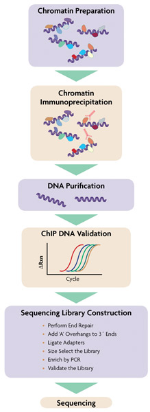 ChIP-IT ChIP-Seq Flow Chart