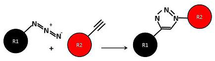 Figure 1: Principle of the click reaction between an azide (R1) and alkyne (R2).