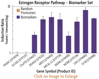 Graph showing the induction ratios of the promoter reporter constructs of the ER Biomarker Set after co-transfection into HT1080 human fibrosarcoma cells with an ER cDNA expression plasmid and treatment with Beta-estradiol.