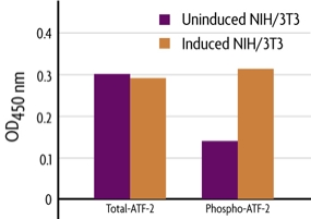 Measurement of phosphorylated ATF-2 and total ATF-2 using the FACE ATF-2 Cell Based ELISA (In Cell Western) method.