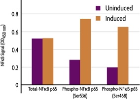 Measurement of phosphorylated NFkB p65 (S468 and S536) and total NFkB p65 using the FACE NFkB p65 Profiler Cell Based ELISA (In Cell Western) method.