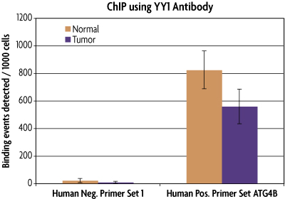 qPCR results of FFPE human colon with YY1 antibody