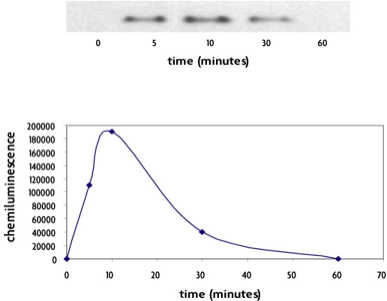 FunctionELISA IκBα and Western blot methods used to monitor the induction of IkBa phosphorylation