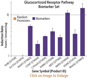 Graph showing the induction ratios of the promoter reporter constructs of the GR Biomarker Set after transfection into HT1080 human fibrosarcoma cells and treatment with dexamethasone.