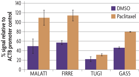 Graph showing lncRNA promoter activity of FIRRE, GAS5, MALAT1 and GAS5 in response to paclitaxel stimulation