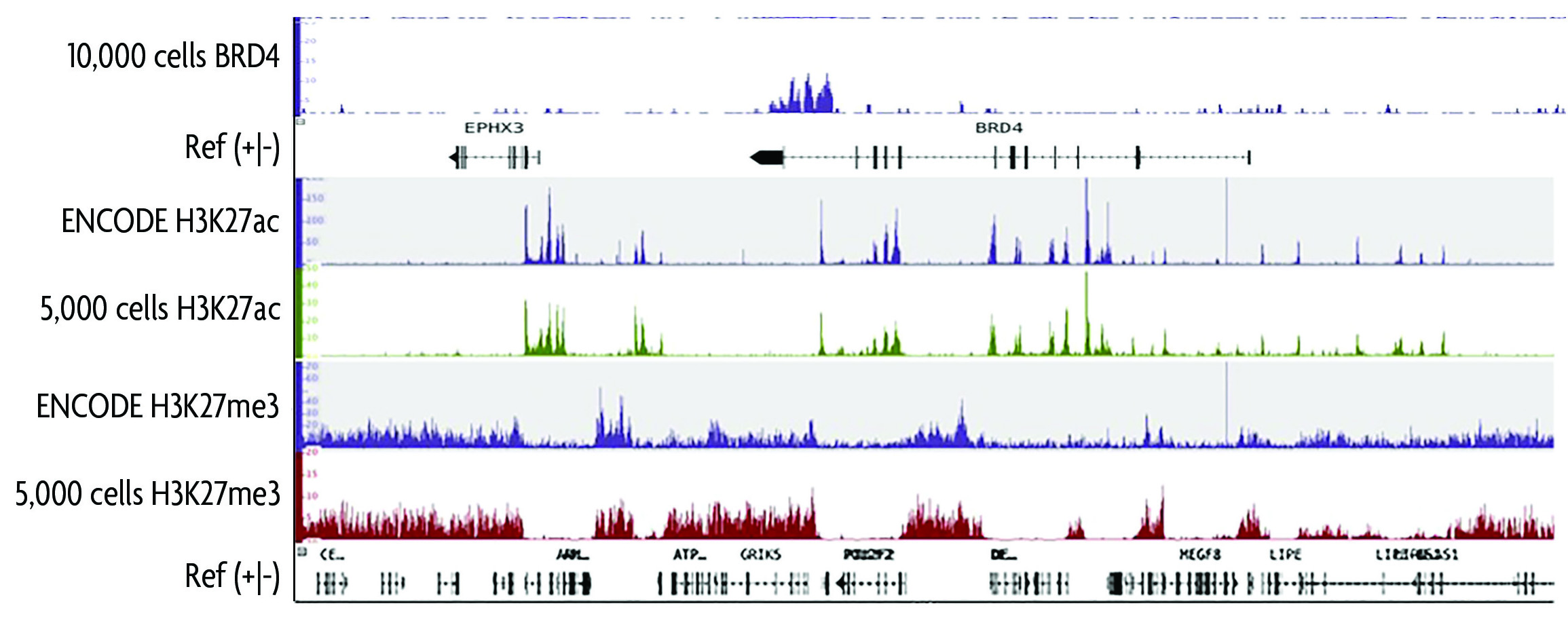 Histone H3 PTM Multiplex Data of Histone Abundance in Mouse Tissue.