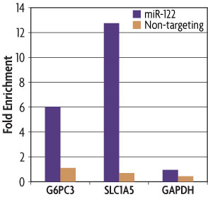 A graph of data generated with the miRNA Target IP Kit showing that G6PC3 and SLC1A5 are bound by miR-122 while GAPDH