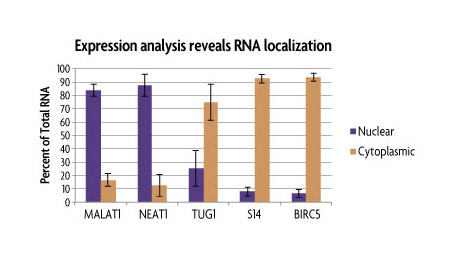 RT-qPCR Expression Data of nuclear and cytoplasmic RNA fractions purified with the RNA Subcellular Isolation Kit