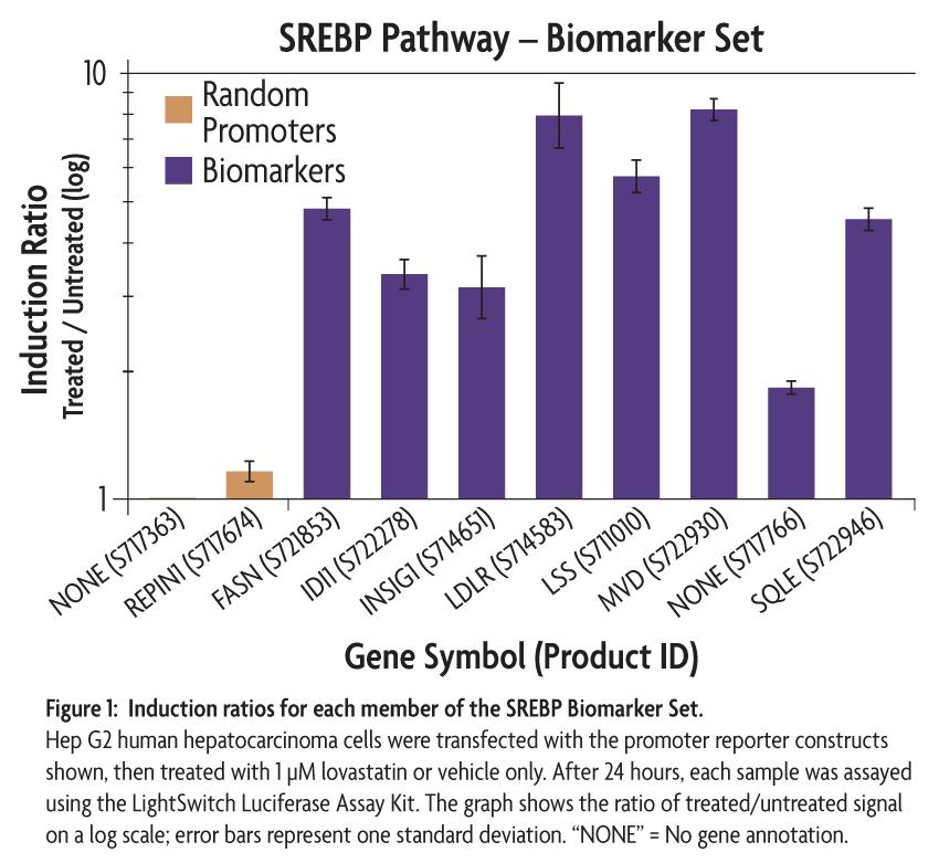 Active Motif Lightswitch Validated Cholesterol Biosynthesis Srebp