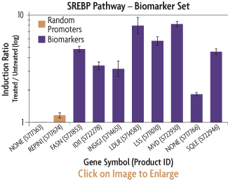 Graph showing the induction ratios of the promoter reporter constructs of the SREBP Biomarker Set after transfection into HeLa human cervical cancer cells and treatment with PKA.