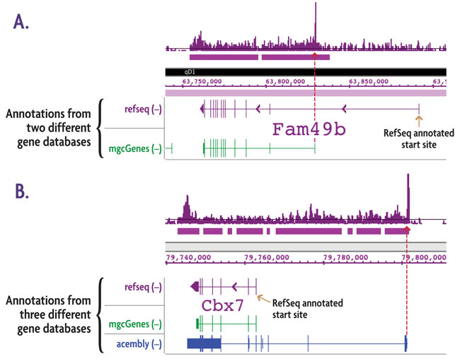 TranscriptionPath-Seq data generated by Active Motif Epigenetic Services reveals alternate transcription start sites (TSSs)