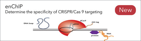 enChIP: Confirm CRISPR/Cas9 Specificity