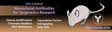 Monoclonal antibodies from Active Motif
