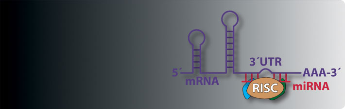 LightSwitch 3'UTR-miRNA Interactions
