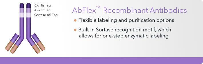 Abflex Antibodies