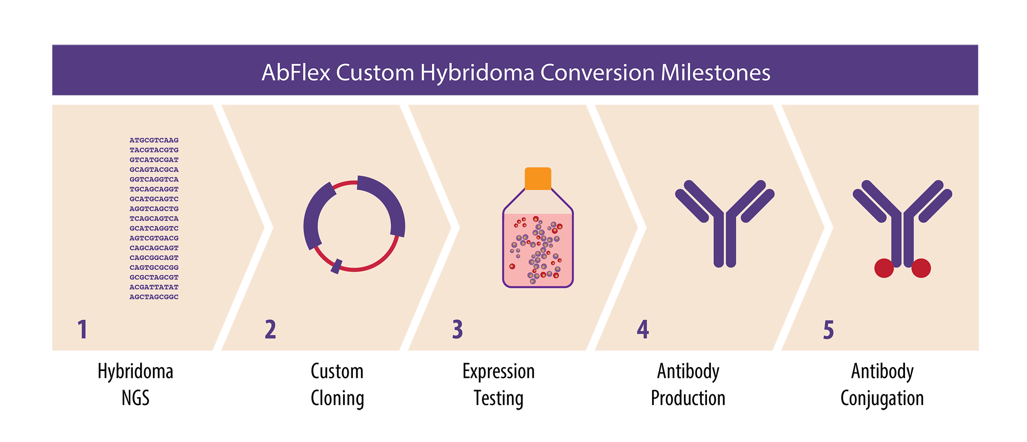 Hybridoma Conversion Services