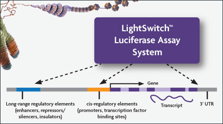 LightSwitch Assay System