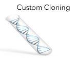LightSwitch Custom Cloning Services