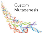 LightSwitch Custom Mutagenesis Services