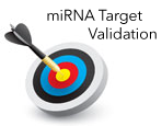 LightSwitch™ miRNA Target Validation Services