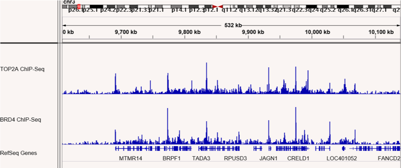 ChIP-Seq shows co-localization of TOP2A and BRD4 binding sites.