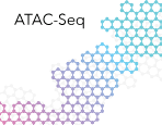 ATAC-Seq Services