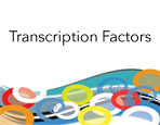 FactorPath™ Services