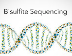 Bisulfite Sequencing Services