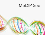 MeDIP Sequencing Services
