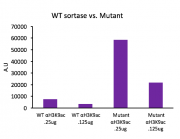 Recombinant Sortase A5 protein