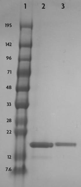 Recombinant Histone H3 acetyl Lys23 analyzed by SDS-PAGE gel.