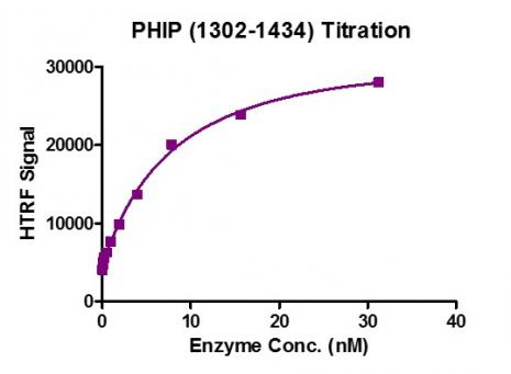 HTRF assay for Recombinant PHIP (1302-1434) activity