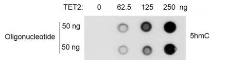 Recombinant TET2 protein activity assay
