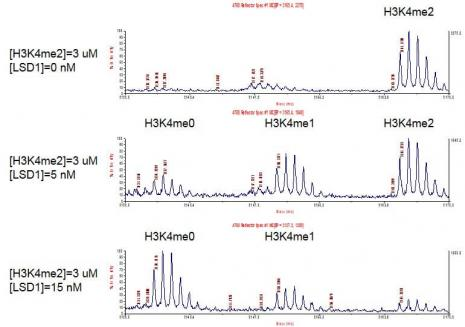 LSD1 / KDM1A activity assay by HTRF