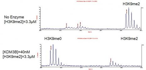 JMJD1B / KDM3B activity assay