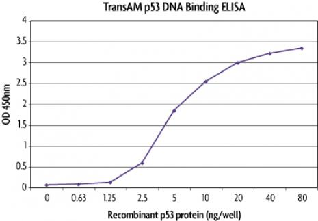 TransAM<sup>®</sup> standard curve using Recombinant p53 protein.